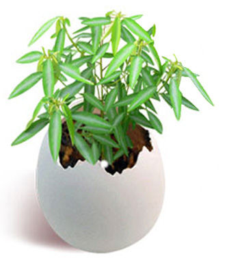 Dancing with egg<br>plant - Aturi