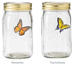 Butterfly in a jar - Yellow swallowtail