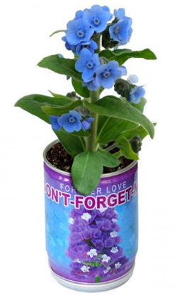 Forget me not seeds in a can